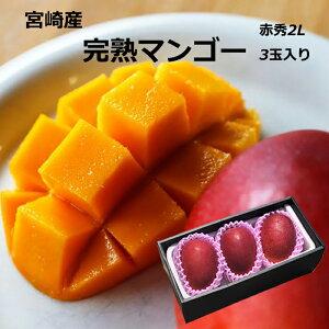 父の日 マンゴー 送料無料 宮崎産 完熟マンゴー 赤秀 2Lサイズ 3玉入り マンゴー ギフト 母の日 プレゼント