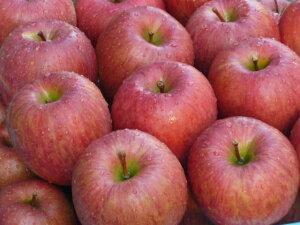 【青森産】贈答用 蜜入りりんご サンふじ 5kg(12〜14玉) お歳暮/ギフト