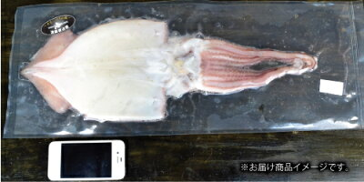 『特大真イカ一夜干し:北海道根室産』(2-3Lサイズ1枚)
