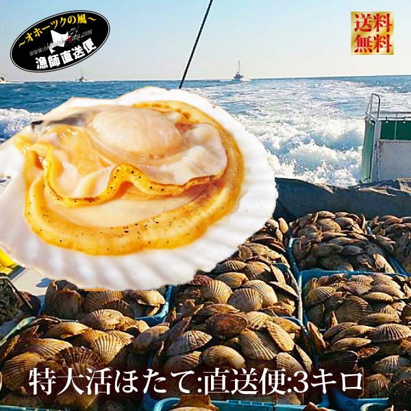 【送料無料】北海道最高峰野付産直送『特大 天然 活ホタテ貝 直送便 3kg』(北海道 殻付き L-3Lサイズ:1枚平均250-350g前後、平均9-12枚前後)《冷蔵便直送》 活ほたて 帆立貝 殻付き 天然物 海鮮 3キロ