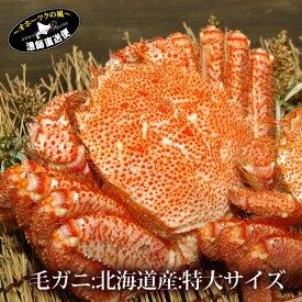『特選 ボイル 毛蟹』(北海道産 特大600g /700g)毛ガニ 毛がに蟹 カニ かに けがに kegani 雄武産 かにみそ カニミソ かに味噌 お取り寄せグルメ 高級 父の日