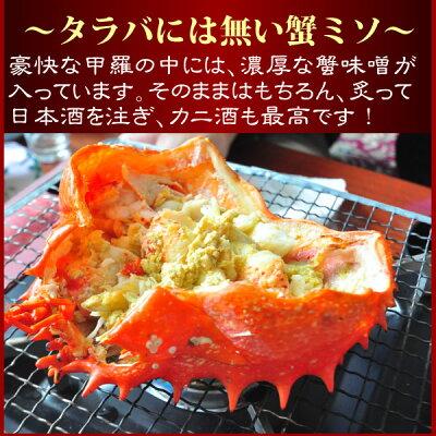 【数量限定】『特選花咲蟹』(ボイル姿特大1.2kg前後)【楽ギフ_のし】【ギフト】《はなさき蟹》《ハナサキガニ》