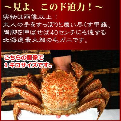 『サイズで選べる特選北海道毛ガニ祭り』(北海道オホーツク産)