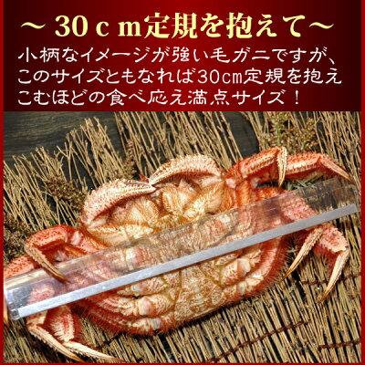 【早期購入で今だけ送料無料】『サイズで選べる特選北海道毛ガニ祭り』(北海道オホーツク産)