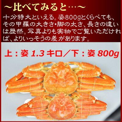『ボイル本ずわい蟹:姿800g前後』【ギフト】【楽ギフ_包装】【楽ギフ_のし】【楽ギフ_のし宛書】