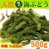 Kudaka Island Okinawa! () Natural sea grapes 500 g (varieties: husaywasta) * shikuwasa juice bird vine with a sauce! * Normal shipping! Cannot be shipped frozen and refrigerated products.
