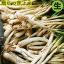 【送料無料】【那覇・農連市場から】沖縄産 島らっきょう生 500g (島ラッキョウ)