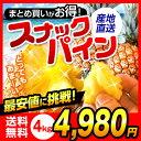 【送料無料】沖縄県産スナックパイン 4kgビタミン|スナックパイン|パイナップル|パイン|沖縄|沖縄産[食べ物>フルーツ>パイナップル]【沖縄】