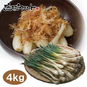 【送料無料】沖縄県産 島らっきょう 4kg (500g×8束) 沖縄 島ラッキョウ らっきょう おつまみ 島野菜