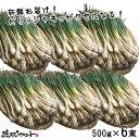 【 送料無料 】 島らっきょう 3kg (500gx6束) 島ラッキョウ 沖縄 らっきょう 島 沖縄県産 新鮮 土付き 沖縄 島野菜 …