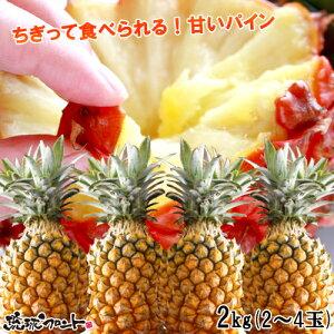 沖縄県産 スナックパイン 約2kg(約2玉〜4玉) 送料無料 【返金保証付】 沖縄土産 パイナップル ボゴールパイン 琉球フロント