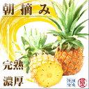 朝摘み スナックパイン Sサイズ【6千円以上送料無料】沖縄宝島のスナックパインは、沖縄の慣行比2割の農薬しか使用しておりませんので安心安全に食べて頂けます