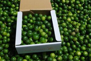 【送料無料】もぎたて青切りシークヮーサー 2kg(70〜80個) 訳あり シークヮーサー シークァーサー 青切り 果実