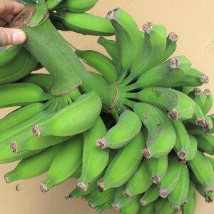 沖縄県産バナナ「三尺バナナ」約5kg 【発送5〜12月】 【チルド発送商品と同梱不可】 島バナナよりも甘い 【スムージーに最適】 【国産 国内産 沖縄産 フルーツ 果物 バナナ お取り寄せ】【