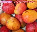 ミニマンゴー 約5kg ☆送料無料 発送時期7月〜8月中旬 マンゴーを超える濃厚美味 国産 沖縄県産 果物 マンゴー トロピ…