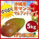 【発送6〜7月】沖縄県産青マンゴー5kg【未熟マンゴー】マムアンディップ