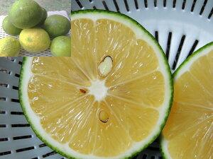 グリーンレモン 1.5kg(12〜18個) 【発送9〜10月】 沖縄県産沖縄のレモンは酸味がまろやか 【国産 国内産 沖縄県産 フルーツ 果物 レモン 檸檬 れもん 柑橘 お取り寄せ】【たま青果】