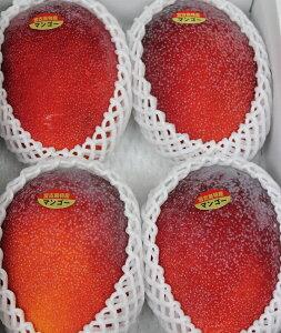 完熟マンゴー 贈答用 約1.5kg 化粧箱入り 発送時期7月〜8月下旬 ☆送料無料☆ アップルマンゴー(アーウィン種)
