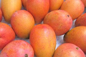 完熟マンゴー約1.5kg前後 発送7月初〜8月中旬 ☆送料無料 JAおきなわ選果マンゴー 沖縄産 JAおきなわの選果基準に適合しながら、贈答用などでは使用できないご家庭ランクのマンゴーです。発