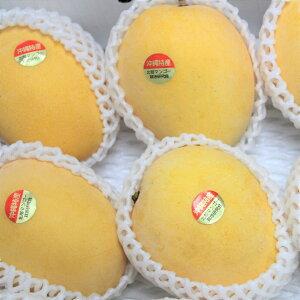 金蜜マンゴー 秀品 約1kg 2〜4個 ☆ 発送7月中旬〜8月上旬 新種稀少マンゴー はちみつのような深い味 沖縄県産 果物 マンゴー トロピカルフルーツ お取り寄せ セット ギフト プレゼント