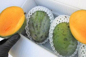 訳あり キーツマンゴー 約1.5kg ☆ 送料無料 ☆流通量が少なく「幻のマンゴー」と呼ばれる。国産 沖縄県産 果物 マンゴー トロピカルフルーツセット