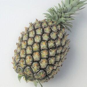 ゴールドバレル (秀品) 2玉(1玉約1.5〜2kg×2) 発送6月〜7月 贈答用パイナップル 至高のパイン・ 沖縄県産 果物 パイナップル パインアップル トロピカルフルーツ お取り寄せ セット ギフト