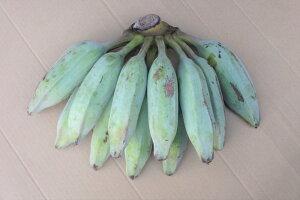 調理用バナナ 2kg(約10〜15本) 【発送8〜11月】 沖縄県産 国産 国内産 沖縄産 フルーツ 果物 バナナ 調理用 料理 材料 お取り寄せ