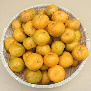沖縄やんばる産フルーツ シークワーサー 3kg(90〜110個 ※目安ですサイズにより前後あり) 【発送12〜3月】(シークワサー) 【柑橘 果物 フルーツ ヒラミレモン ミカン ビタミンC クエン酸