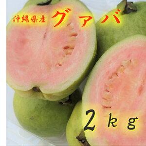 グァバ 約2kg 【発送7月下旬〜9月】 沖縄産 赤・白どちらになるかはお任せになります。 【沖縄産 グアバ トロピカルフルーツ 果物 お取り寄せ / βカロテン ビタミンC リコピン ポリフェノー