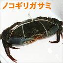 沖縄産!ノコギリガサミ(約1.5kg)2〜3杯