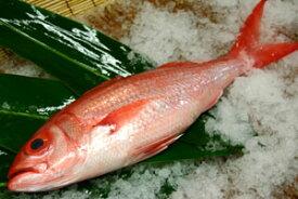 アカマチ(ハマダイ)1.5〜2kg下処理価格