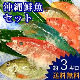 【送料無料】 おまかせ沖縄鮮魚セット4kg(2〜3種類)
