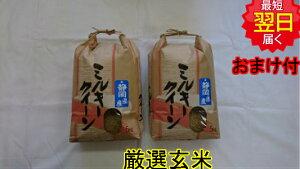 【令和元年産 】静岡県産 厳選 ミルキークイーン玄米10kg(5kg×2)送料無料※北海道、沖縄は発送見合わせております。