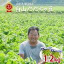 白山 だだちゃ豆 1.2kg (600g×2袋) 山形県鶴岡産 枝豆 えだまめ 送料無料 ※一部地域は別途送料追加 数量限定 予約販…