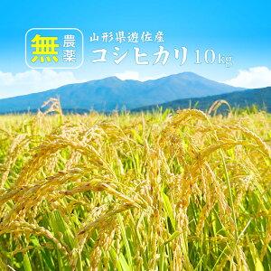 無農薬 米 山形 新米 コシヒカリ 10kg (5kg×2袋) 無洗米/白米/玄米 送料無料(沖縄を除く)