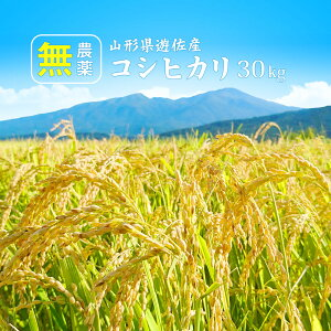 無農薬 米 山形 新米 コシヒカリ 30kg(精米後 約27kg) 無洗米/白米/玄米 送料無料