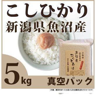 特别栽培26年产鱼沼越光5kg白米[5k-un]fs04gm