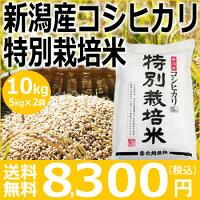 特別栽培米稲バック新米