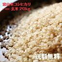 富山県産コシヒカリ玄米(一等米)20kg【令和元年度産】