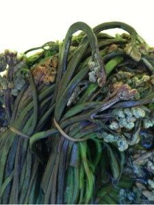 国産 天然 山菜 塩蔵(塩漬け)わらび(ワラビ)500gその日の 採れたて わらび(ワラビ)をその日に塩漬け 添加物一切なしの安心安全食材ですお漬物 お浸し 炊き物 山菜うどん 山菜そば 本