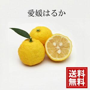 【産地直送】【5kg】【送料無料】減農薬 愛媛産 はるか 贈答品 ギフト 贈り物