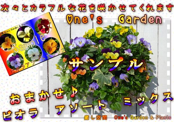 癒し空間 One's Garden おまかせビオラとパンジー&ビオラのハンギングバスケットからお選びください(空中寄せ植え)秋から春バージョン♪未完成品です【送料無料商品です】色指定不可