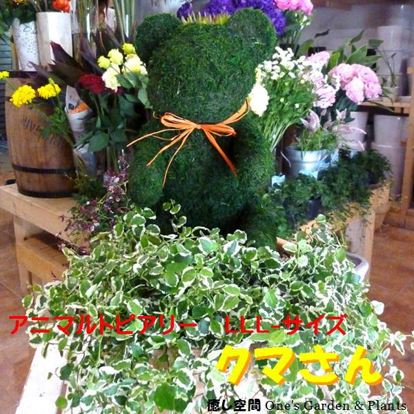【観葉植物 おしゃれ ギフト 送料無料】アニマルトピアリーモス クマさん(熊)LLLサイズ 動物シリーズ 斑入りフィカスプミラを植え付けています テラコッタ陶器鉢植え♪誕生日やプレゼントに♪季節の寄せ植えにも変更可能(別料)フラワーギフト 楽ギフ_メッセ入力