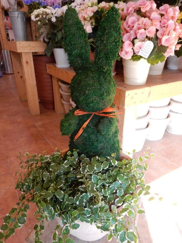 【観葉植物 おしゃれ ギフト 送料無料】アニマルトピアリーモス 動物シリーズウサギさん LLサイズ テラコッタ 斑入りフィカスプミラを植えています 場所取らずでちょこっと置くだけ♪プレゼントや景品にも♪楽ギフ_包装 楽ギフ_メッセ入力