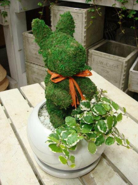 アニマルトピアリーモス♪動物シリーズ♪チンチンワンちゃん 犬(イヌ)♪Sサイズ斑入りフィカスプミラを植え付けています♪陶器鉢植え・受け皿付き 場所取らずでちょこっと置くだけ♪誕生日やお祝い・プレゼントや景品にも♪