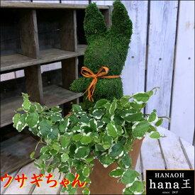 アニマルトピアリーモス♪動物シリーズ♪ウサギちゃん(うさぎ)♪Sサイズ斑入りフィカスプミラを植え付けています♪テラコッタ陶器鉢植え 場所取らずでちょこっと置くだけ♪誕生日やお祝い・プレゼントや景品にも♪