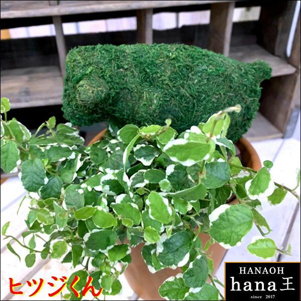 アニマルトピアリーモス♪動物シリーズ♪ヒツジくん(羊)♪Sサイズ斑入りフィカスプミラを植え付けています♪テラコッタ陶器鉢植え 場所取らずでちょこっと置くだけ♪誕生日やお祝い・プレゼントや景品にも♪
