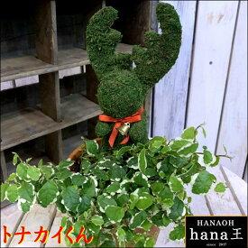 アニマルトピアリーモス♪動物シリーズ♪トナカイさん♪Sサイズ斑入りフィカスプミラを植え付けています♪テラコッタ陶器鉢植え 場所取らずでちょこっと置くだけ♪誕生日やお祝い・プレゼントや景品にも♪