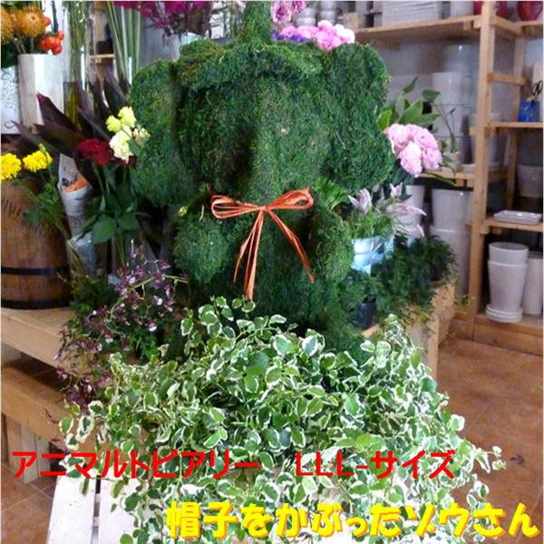 【観葉植物 おしゃれ ギフト 送料無料】斑入りフィカスプミラを植え付けたアニマルトピアリーモス♪動物シリーズ♪帽子をかぶったゾウさん(像)♪LLLサイズ テラコッタ♪プレゼントに♪季節の寄せ植えにも変更可能(別料)【フラワーギフト】