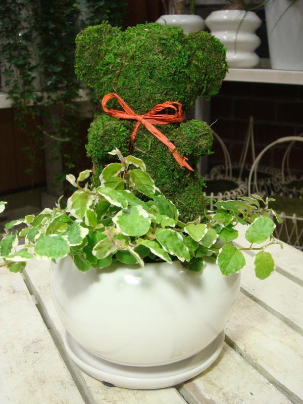 アニマルトピアリーモス♪動物シリーズ♪クマさん(熊)♪Sサイズ斑入りフィカスプミラを植え付けています♪陶器鉢植え・受け皿付き 場所取らずでちょこっと置くだけ♪誕生日やお祝い・プレゼントや景品にも♪